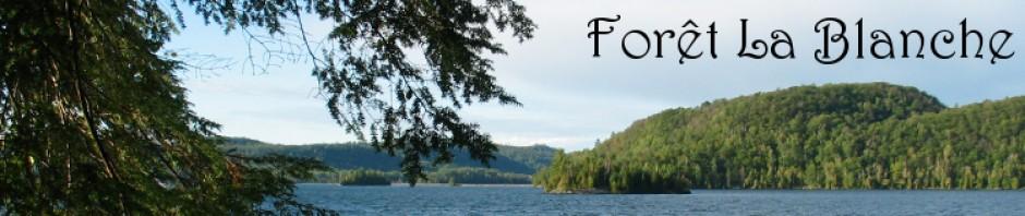 Forêt-la-Blanche