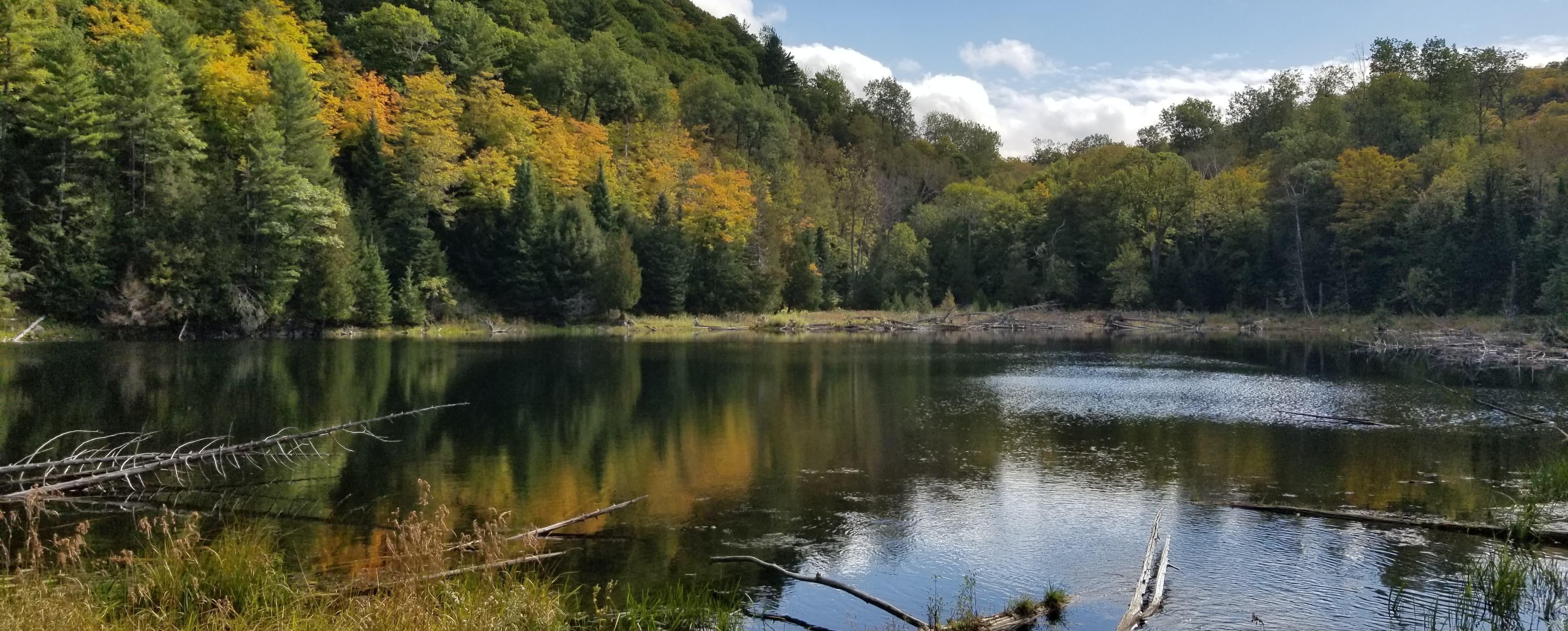 Forêt-la-Blanche Ecological Reserve